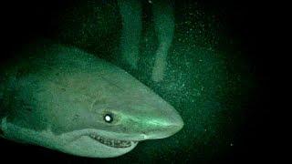 Nyílt tengeren: Cápák között előzetes