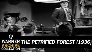 A megkövült erdő előzetes