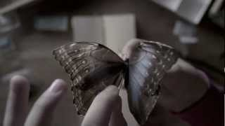 The Butterfly Room előzetes